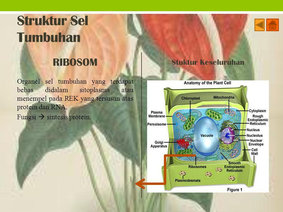 Struktur Sel Tumbuhan RIBOSOM Stuktur Keseluruhan