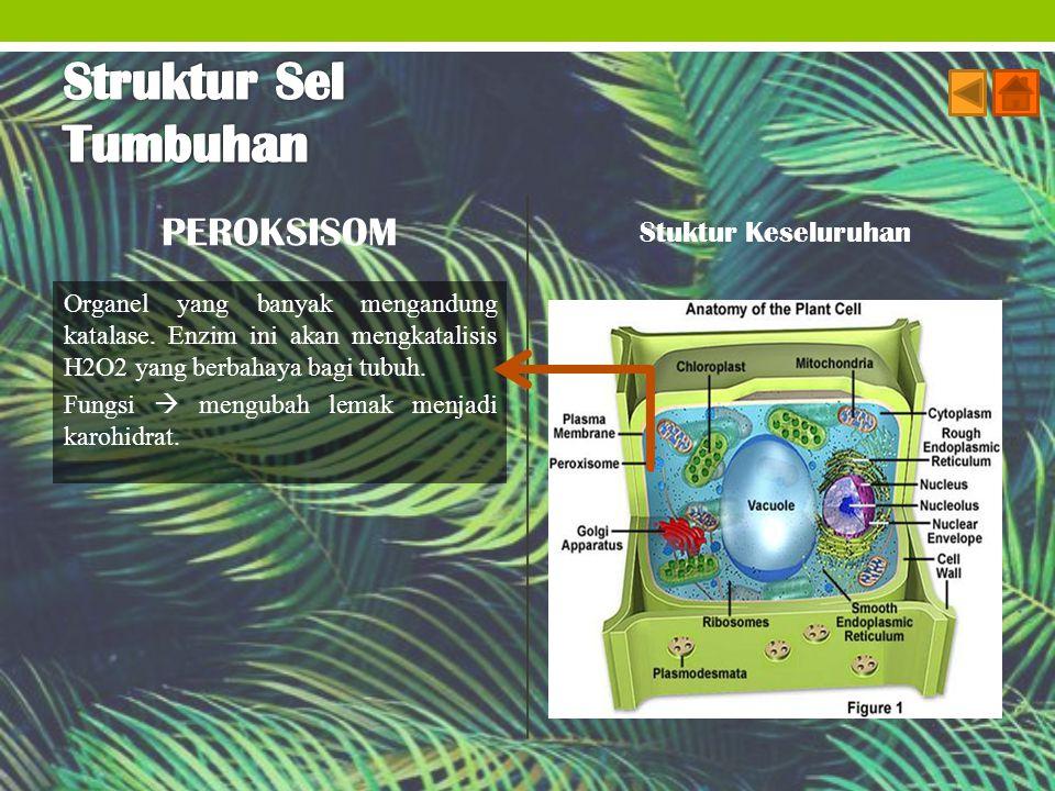 Struktur Sel Tumbuhan PEROKSISOM Stuktur Keseluruhan
