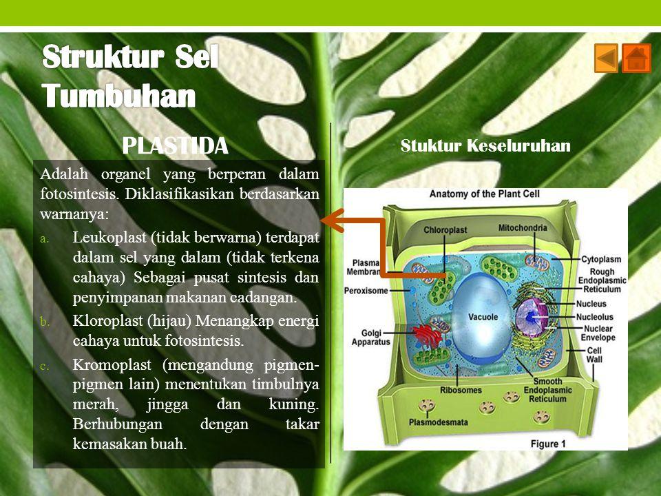 Struktur Sel Tumbuhan PLASTIDA Stuktur Keseluruhan