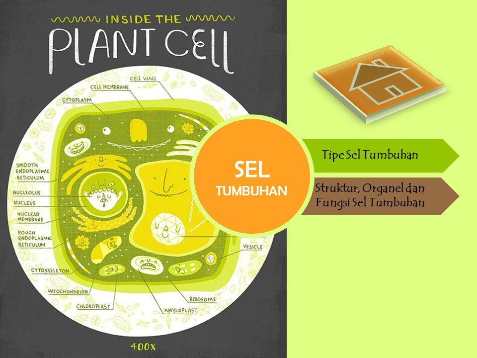 Struktur, Organel dan Fungsi Sel Tumbuhan
