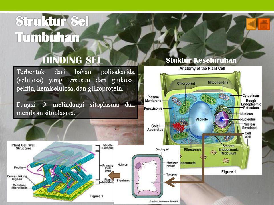 Struktur Sel Tumbuhan DINDING SEL Stuktur Keseluruhan