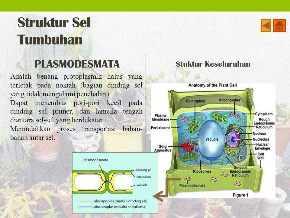 Struktur Sel Tumbuhan PLASMODESMATA Stuktur Keseluruhan