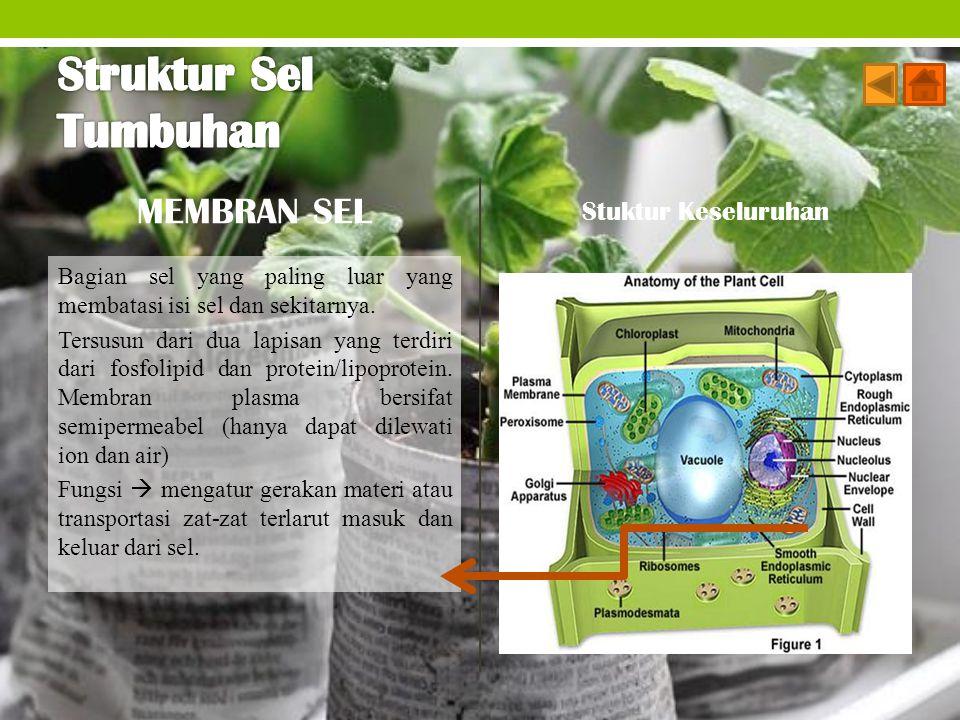 Struktur Sel Tumbuhan MEMBRAN SEL Stuktur Keseluruhan