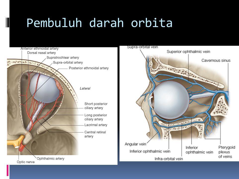 Pembuluh darah orbita