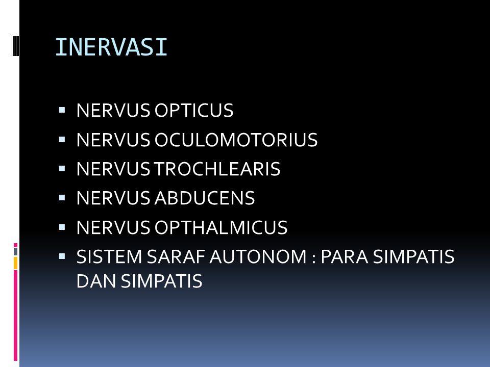 INERVASI NERVUS OPTICUS NERVUS OCULOMOTORIUS NERVUS TROCHLEARIS