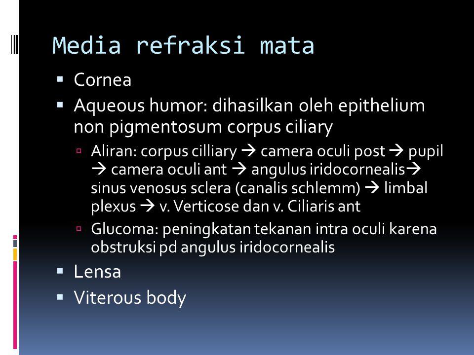 Media refraksi mata Cornea