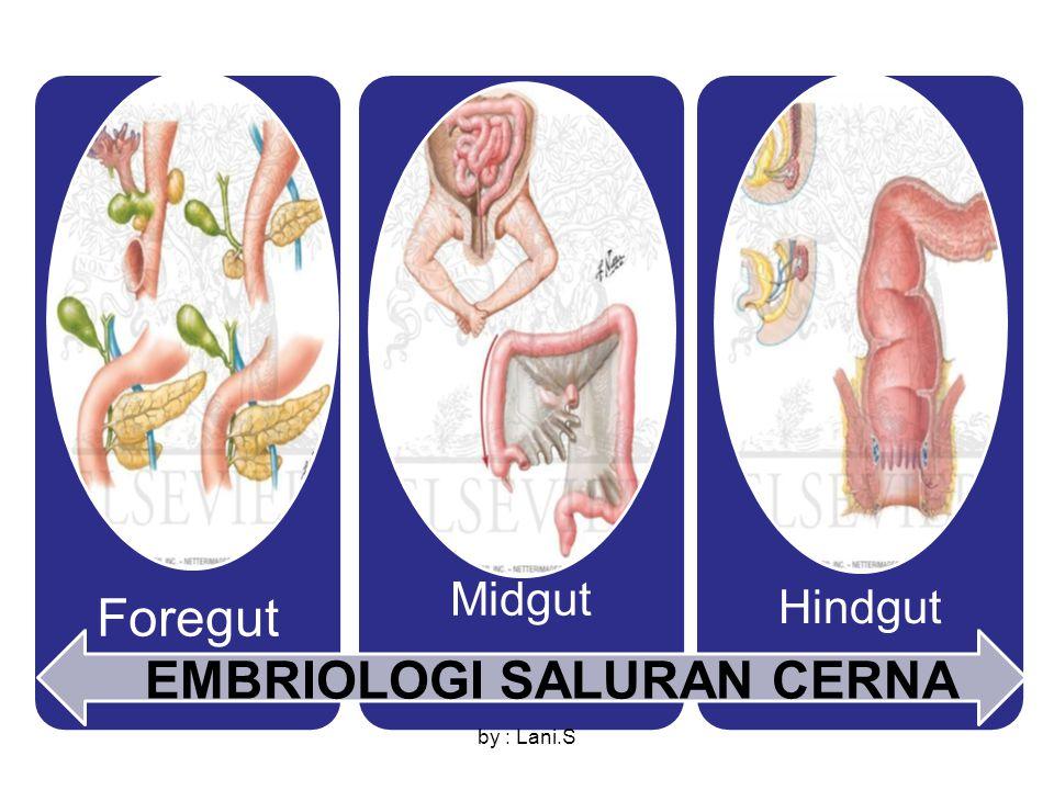 EMBRIOLOGI SALURAN CERNA