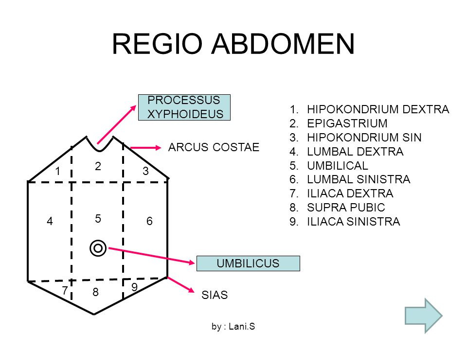 REGIO ABDOMEN PROCESSUS XYPHOIDEUS HIPOKONDRIUM DEXTRA EPIGASTRIUM