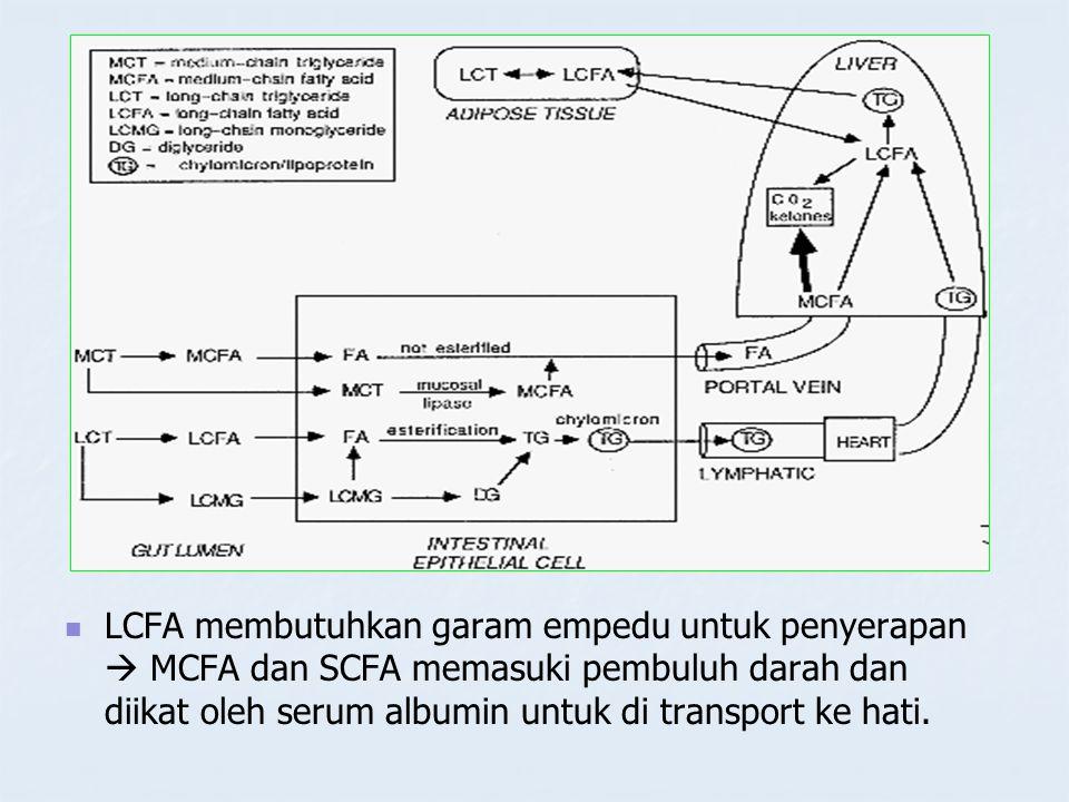 LCFA membutuhkan garam empedu untuk penyerapan  MCFA dan SCFA memasuki pembuluh darah dan diikat oleh serum albumin untuk di transport ke hati.