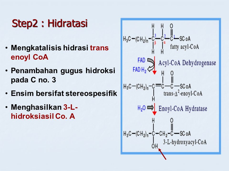 Step2 : Hidratasi Mengkatalisis hidrasi trans enoyl CoA