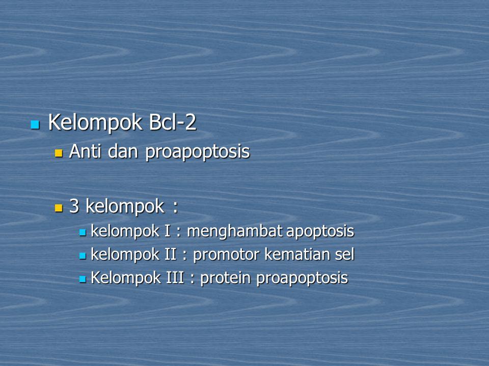 Kelompok Bcl-2 Anti dan proapoptosis 3 kelompok :