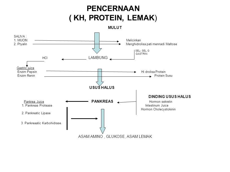 PENCERNAAN ( KH, PROTEIN, LEMAK)