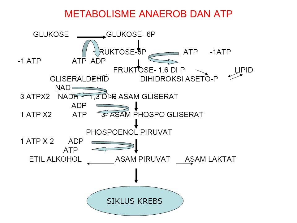 METABOLISME ANAEROB DAN ATP