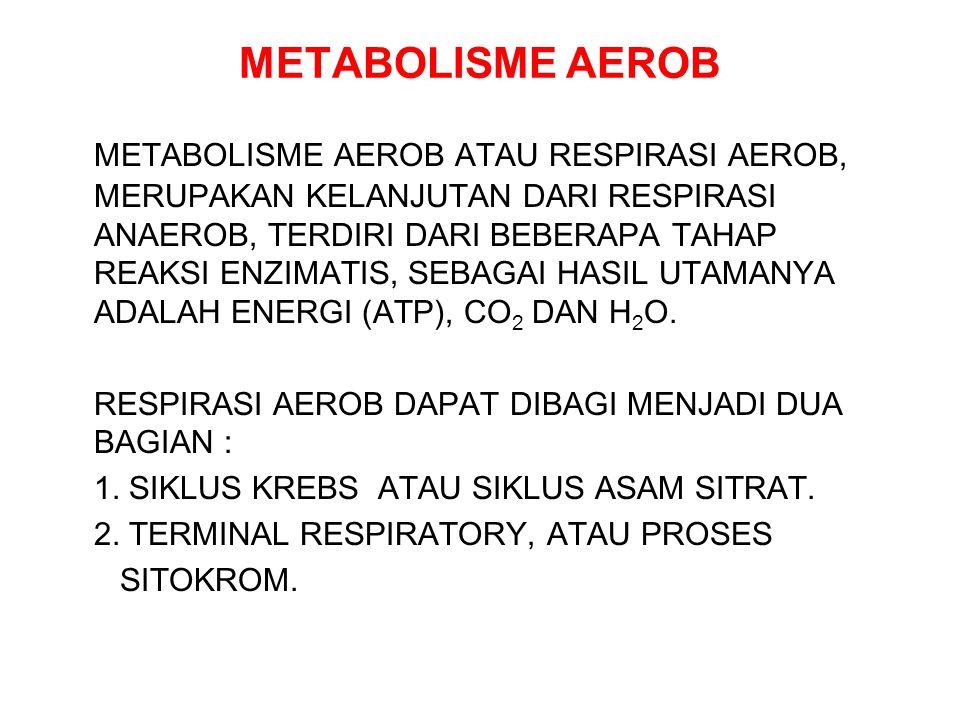 METABOLISME AEROB