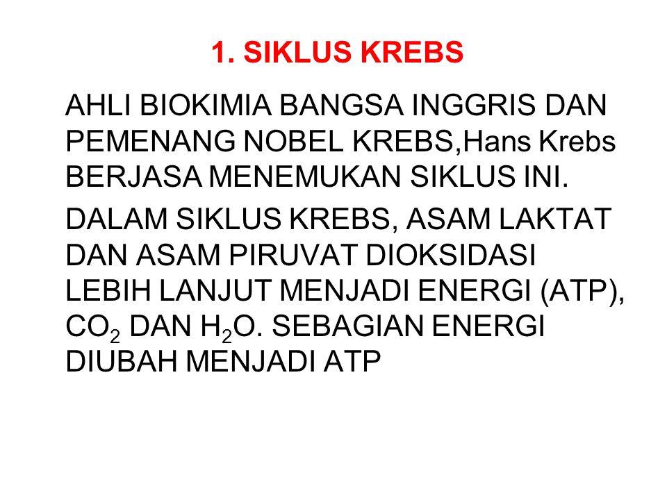 1. SIKLUS KREBS AHLI BIOKIMIA BANGSA INGGRIS DAN PEMENANG NOBEL KREBS,Hans Krebs BERJASA MENEMUKAN SIKLUS INI.