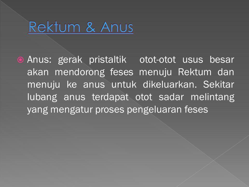 Rektum & Anus