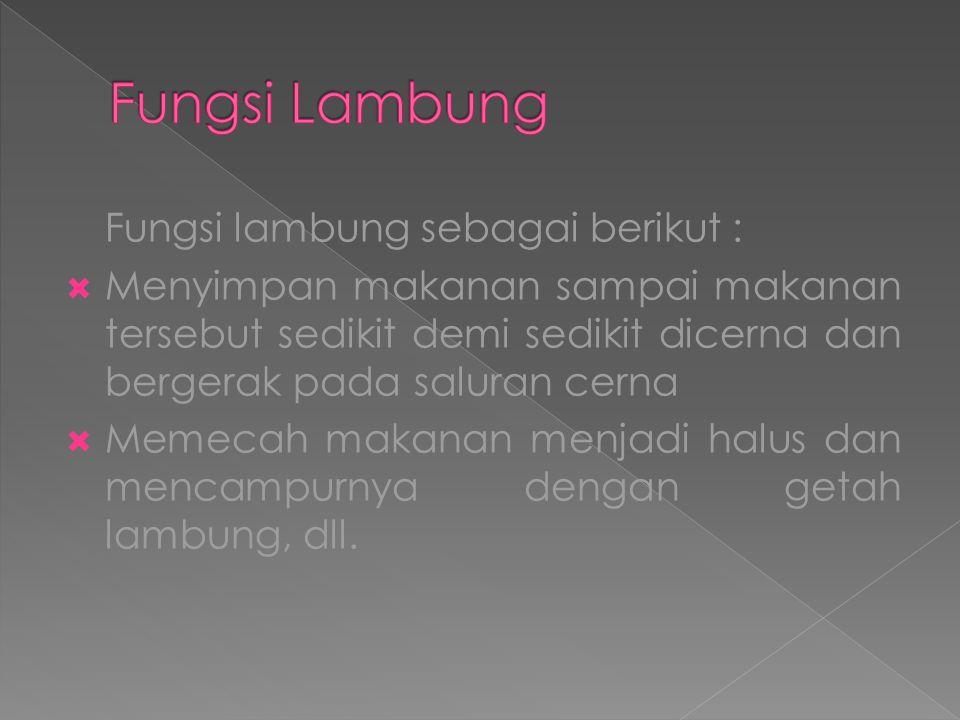 Fungsi Lambung Fungsi lambung sebagai berikut :