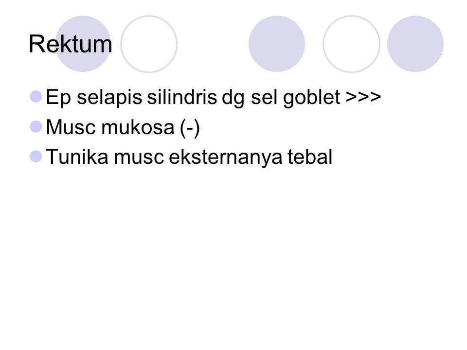 Rektum Ep selapis silindris dg sel goblet >>> Musc mukosa (-)