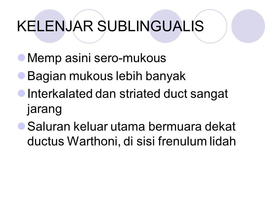 KELENJAR SUBLINGUALIS