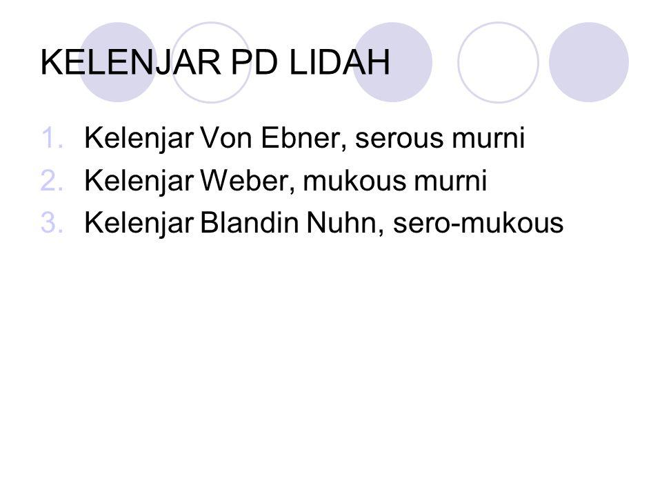 KELENJAR PD LIDAH Kelenjar Von Ebner, serous murni