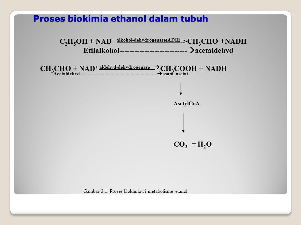 Proses biokimia ethanol dalam tubuh