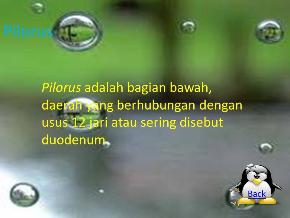 Pilorus Pilorus adalah bagian bawah, daerah yang berhubungan dengan usus 12 jari atau sering disebut duodenum.