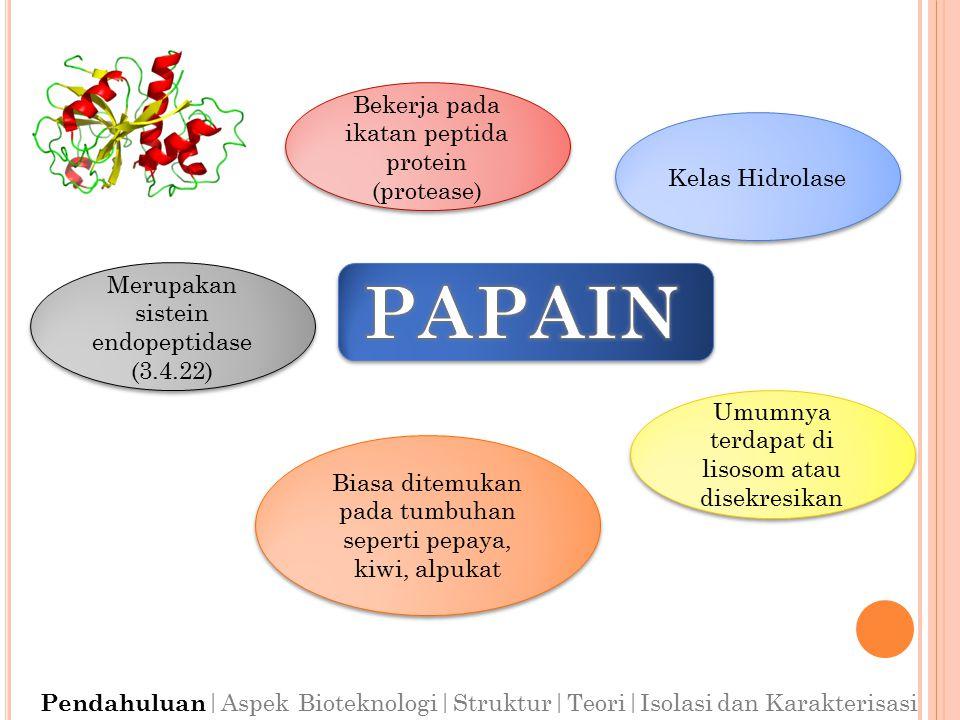PAPAIN Bekerja pada ikatan peptida protein (protease) Kelas Hidrolase