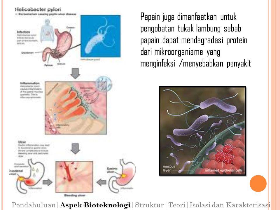 Papain juga dimanfaatkan untuk pengobatan tukak lambung sebab papain dapat mendegradasi protein dari mikroorganisme yang menginfeksi /menyebabkan penyakit