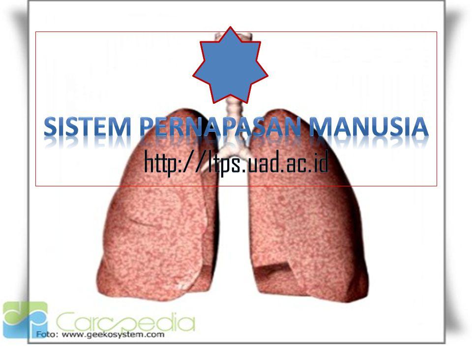 Sistem pernapasan Manusia http://ltps.uad.ac.id