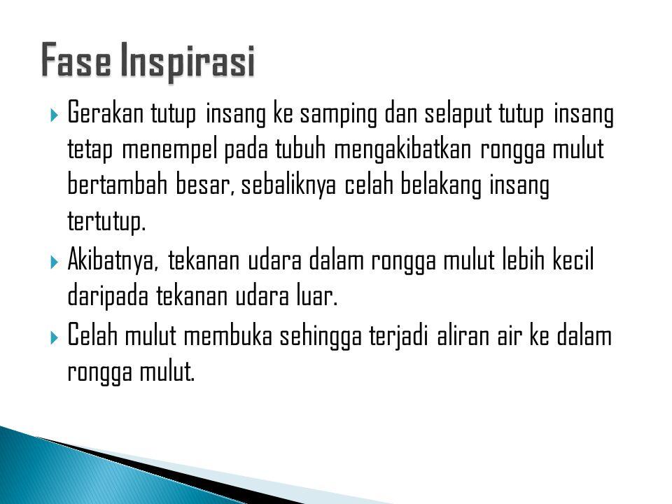 Fase Inspirasi