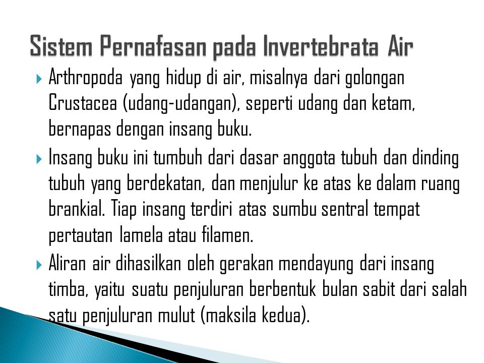 Sistem Pernafasan pada Invertebrata Air
