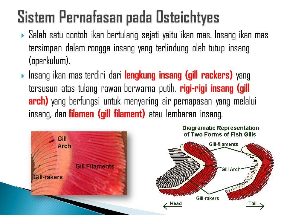 Sistem Pernafasan pada Osteichtyes