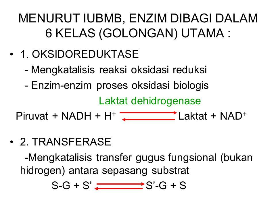 MENURUT IUBMB, ENZIM DIBAGI DALAM 6 KELAS (GOLONGAN) UTAMA :