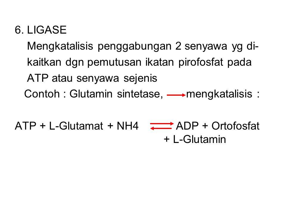 6. LIGASE Mengkatalisis penggabungan 2 senyawa yg di- kaitkan dgn pemutusan ikatan pirofosfat pada.