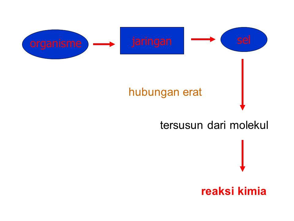 hubungan erat tersusun dari molekul reaksi kimia jaringan sel organisme