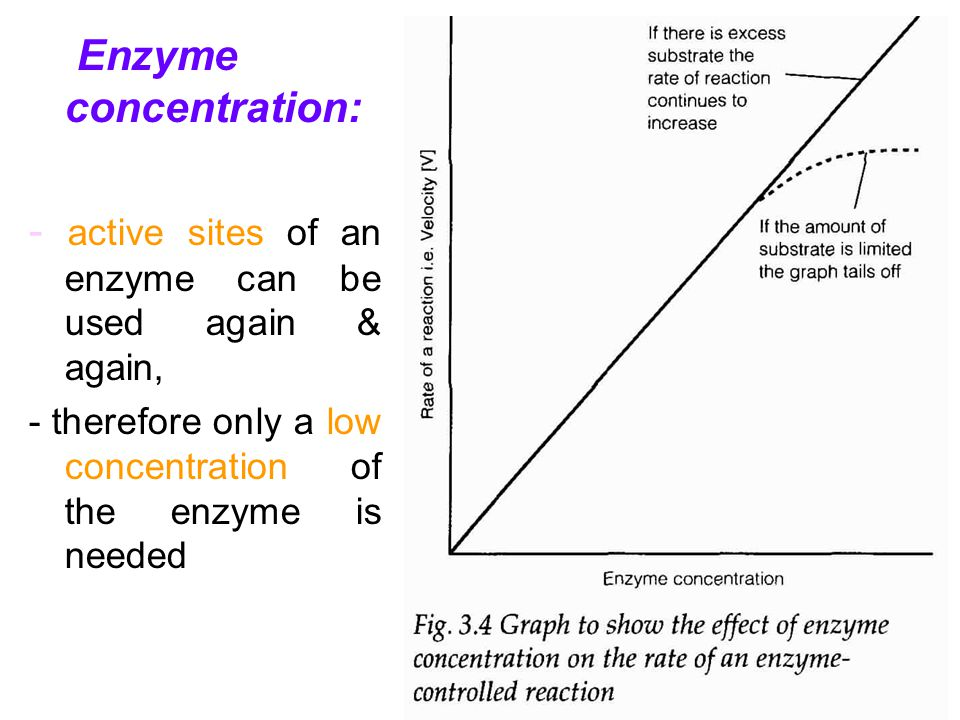 Enzyme concentration: