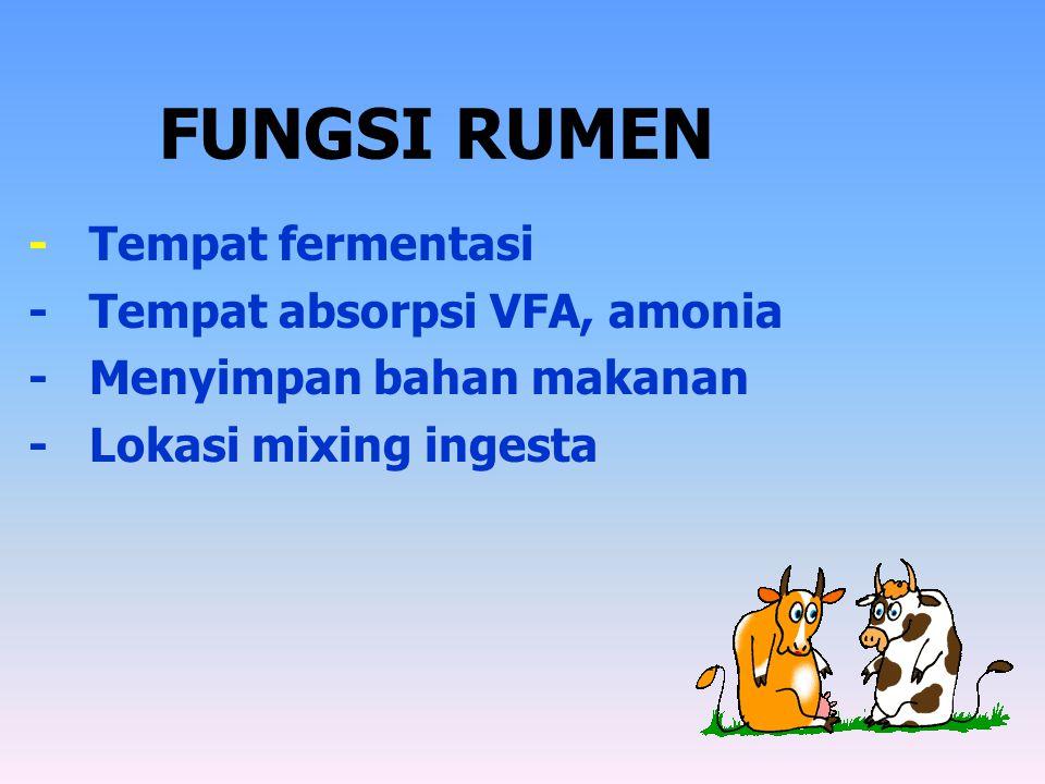 FUNGSI RUMEN - Tempat fermentasi - Tempat absorpsi VFA, amonia