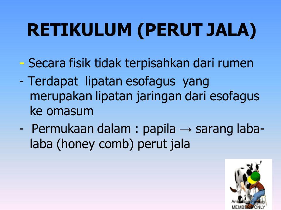 RETIKULUM (PERUT JALA)