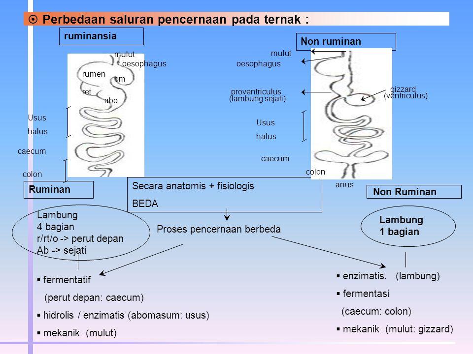 Perbedaan saluran pencernaan pada ternak :
