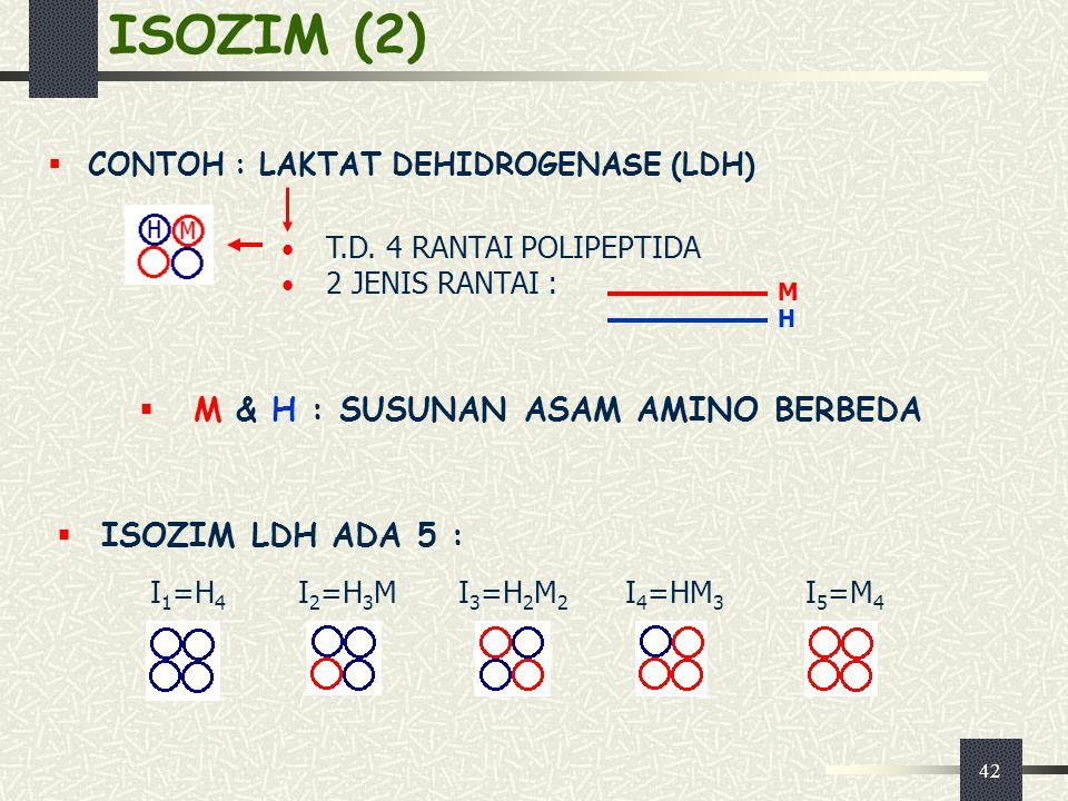 ISOZIM (2) M & H : SUSUNAN ASAM AMINO BERBEDA ISOZIM LDH ADA 5 :