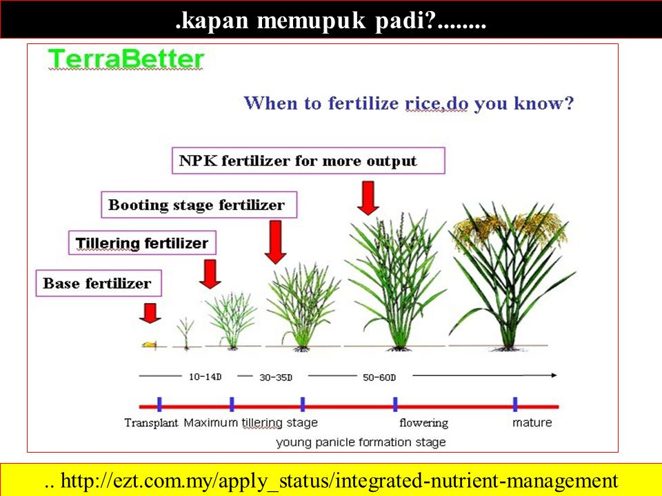 .. http://ezt.com.my/apply_status/integrated-nutrient-management