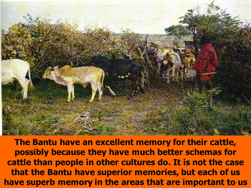 The Bantu have an excellent memory for their cattle, possibly because they have much better schemas for cattle than people in other cultures do.