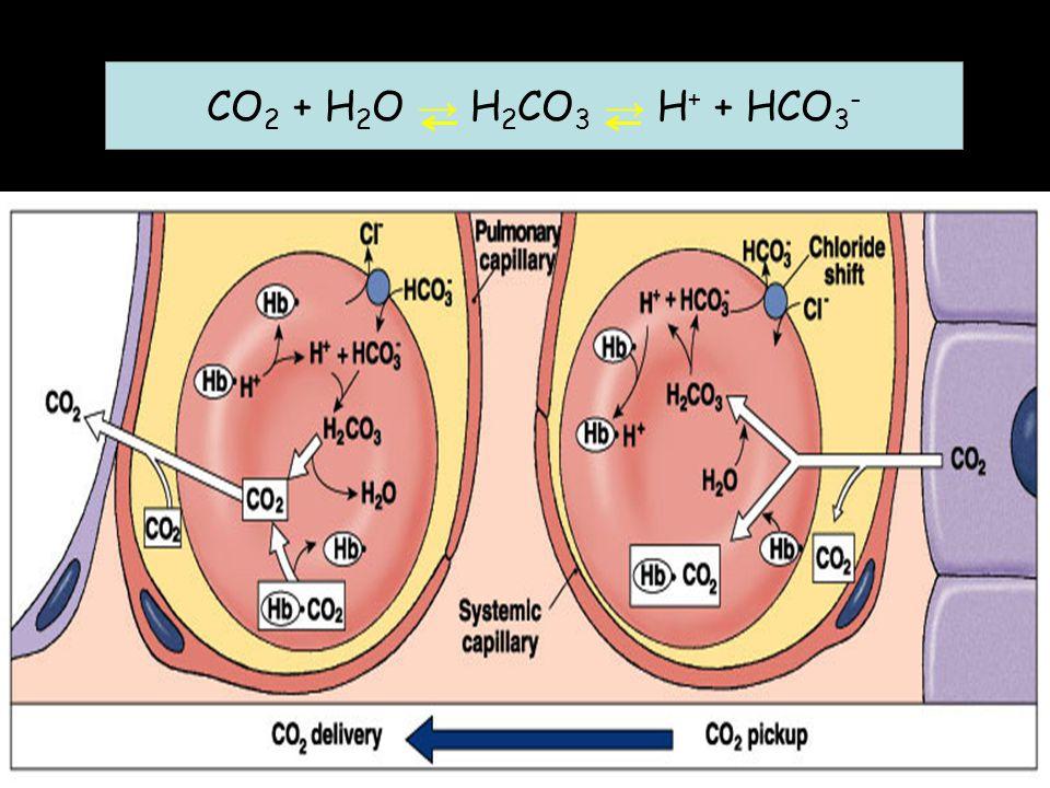 CO2 + H2O → H2CO3 → H+ + HCO3-