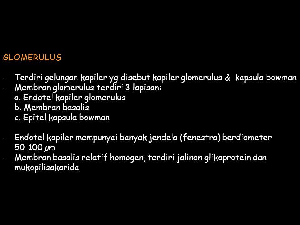GLOMERULUS Terdiri gelungan kapiler yg disebut kapiler glomerulus & kapsula bowman. Membran glomerulus terdiri 3 lapisan: