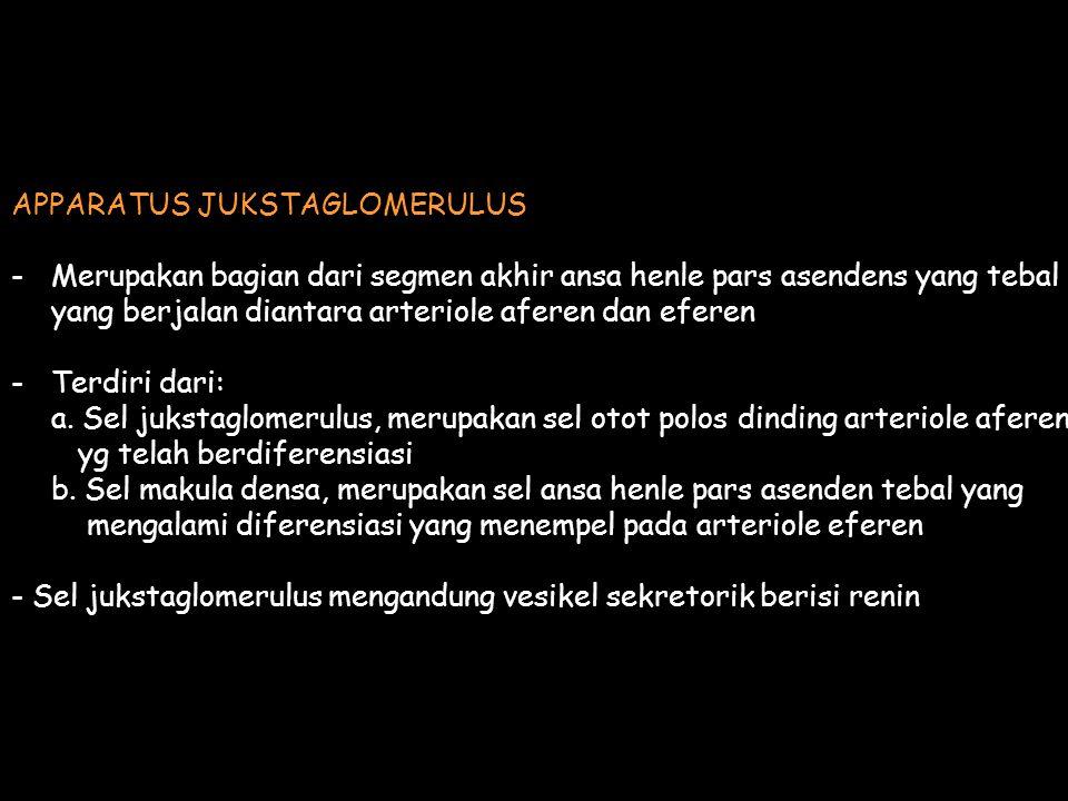 APPARATUS JUKSTAGLOMERULUS