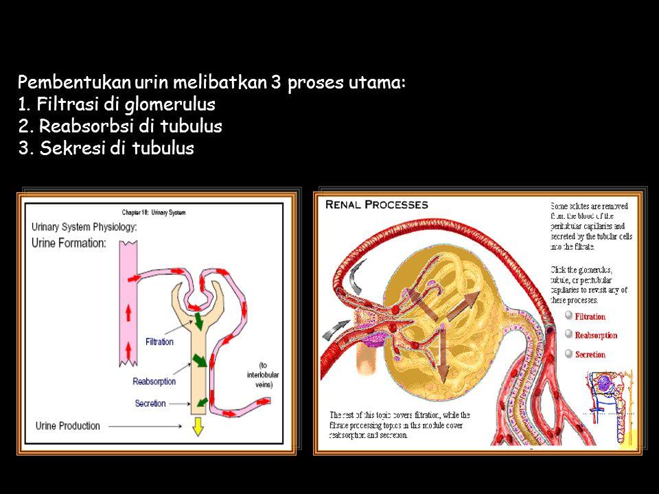 Pembentukan urin melibatkan 3 proses utama: