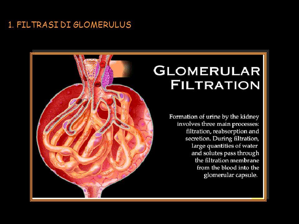 1. FILTRASI DI GLOMERULUS