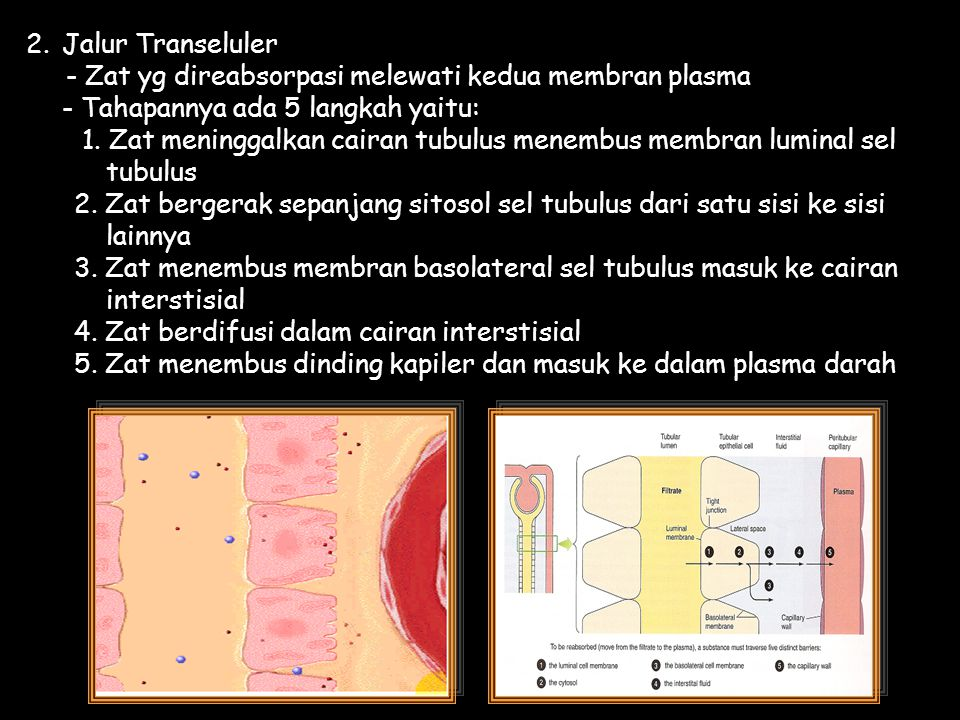 2. Jalur Transeluler - Zat yg direabsorpasi melewati kedua membran plasma. - Tahapannya ada 5 langkah yaitu: