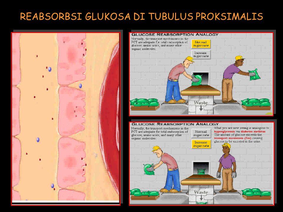 REABSORBSI GLUKOSA DI TUBULUS PROKSIMALIS