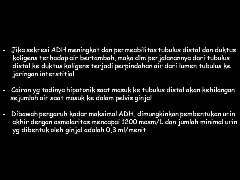 Jika sekresi ADH meningkat dan permeabilitas tubulus distal dan duktus